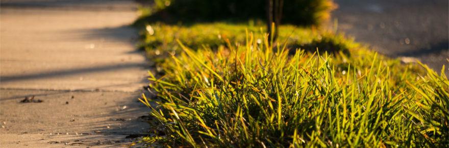 sidewalk-grass
