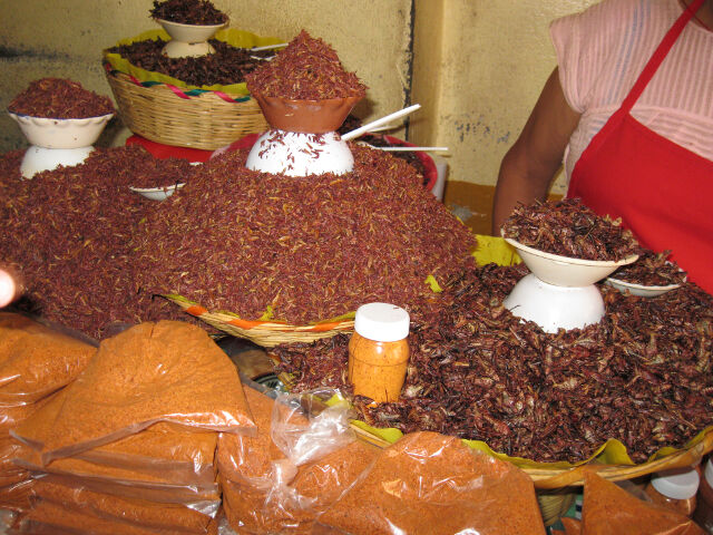 yummy-crickets-in-oaxaca